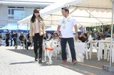 画像: アイマスクをして盲導犬と一緒に歩く体験コーナーも開催。BS11で放送中の「MOTORISE」でもお馴染みの延時成実さんも盲導犬を体験していました。