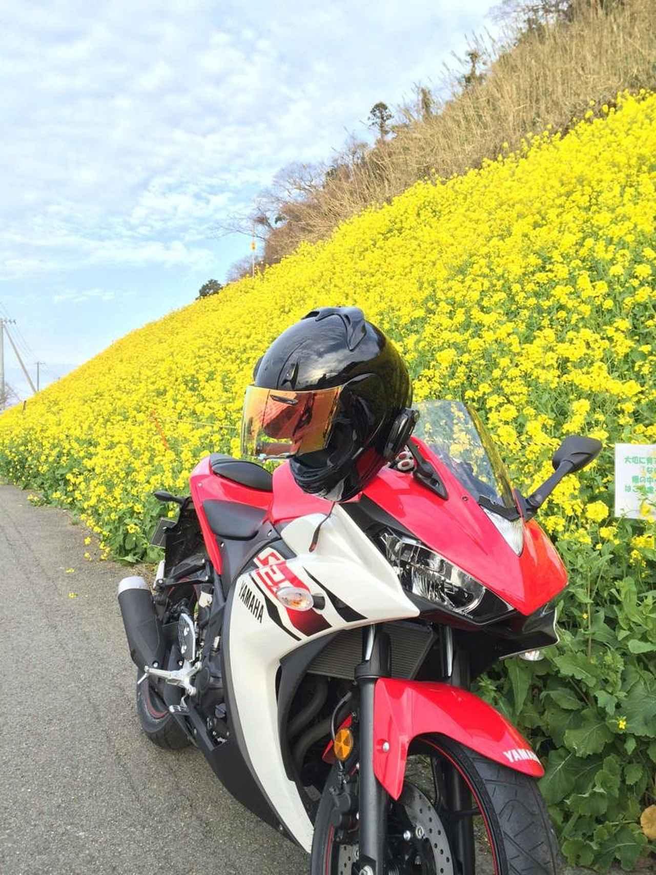 画像: 伊予灘 双海付近の菜の花畑に納車記念で行きました!