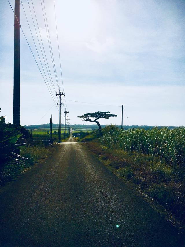 画像: シュガーロード。 連続ドラマ小説ちゃらさんで有名な道。サトウキビ畑の間に真っ直ぐに通る道。気持ちよかったです 小浜島は、走りたい道がたくさんありました。