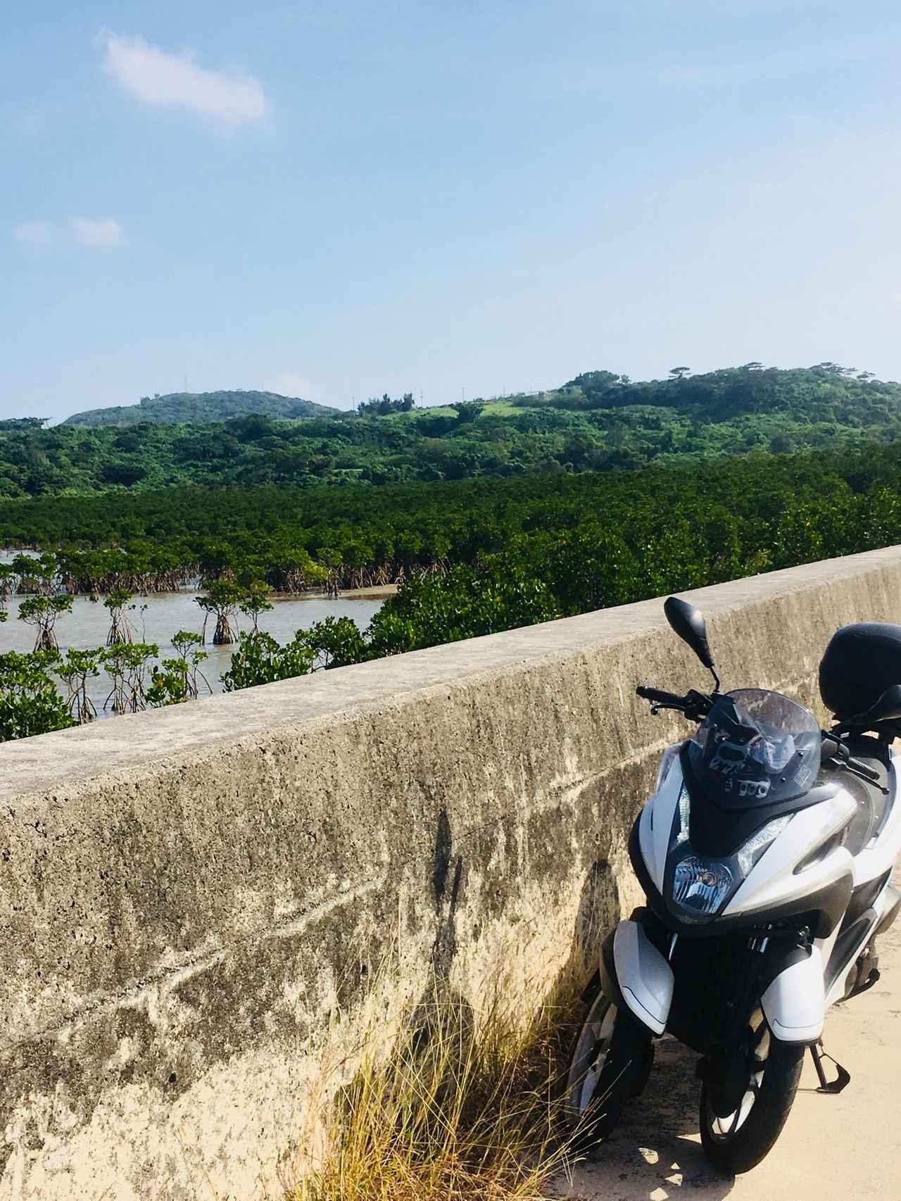 画像: マングローブ林 迫力に圧倒!そして自然の力と美しさにうっとりです。ワイルドでかっこいい景色だったよ(  ゚Д゚)