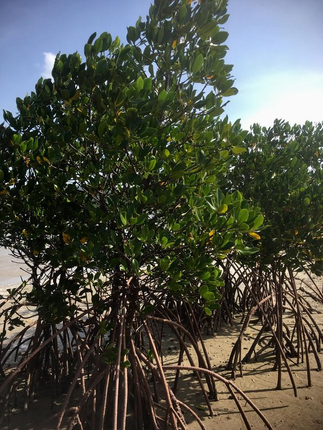 画像2: またまた、石垣島から小さな島に渡り、ひとり旅してきました( › ·̮ ‹ )