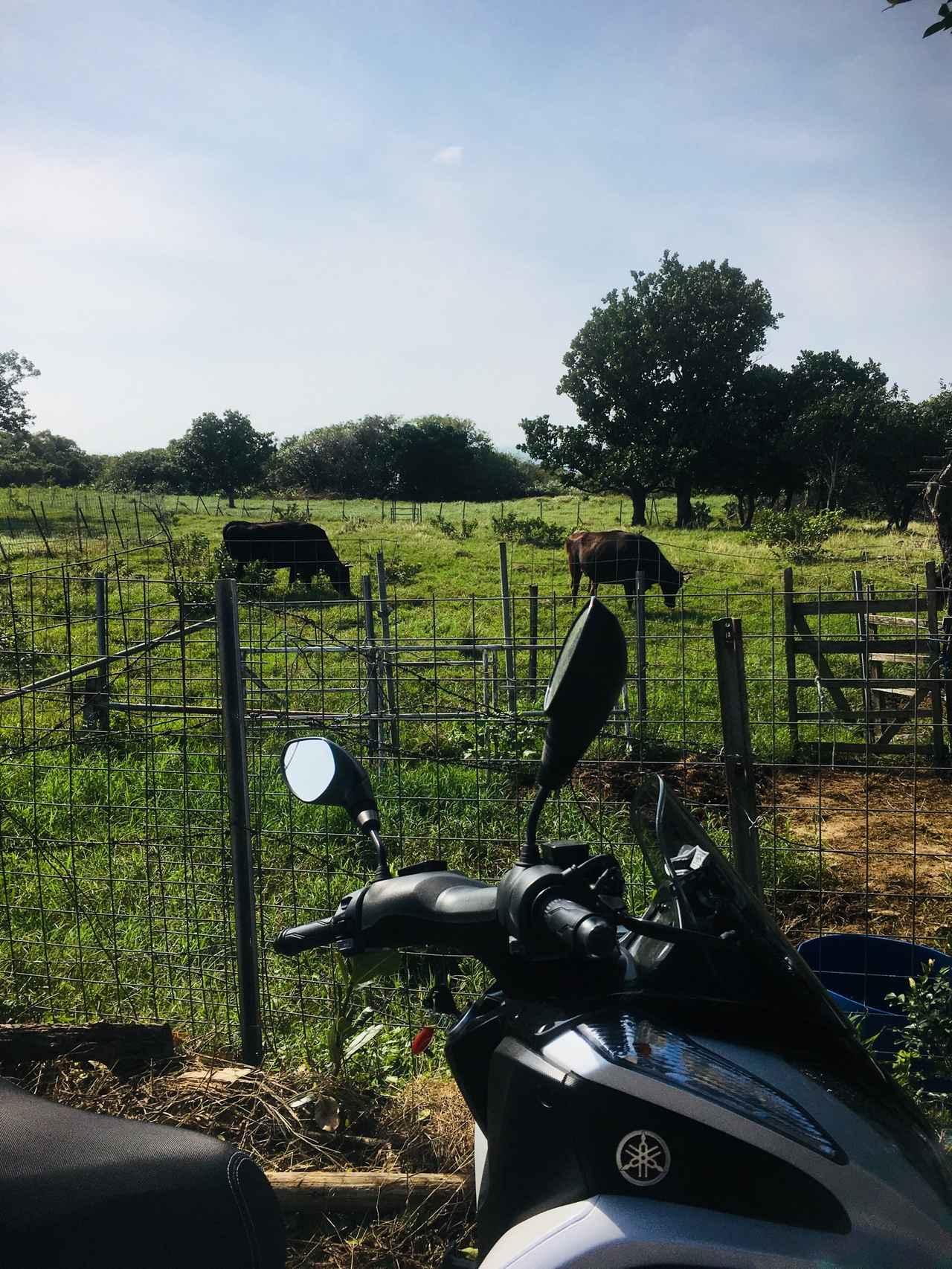 画像: 牛さんや、やぎさんもいて のんびり贅沢な気分になれます
