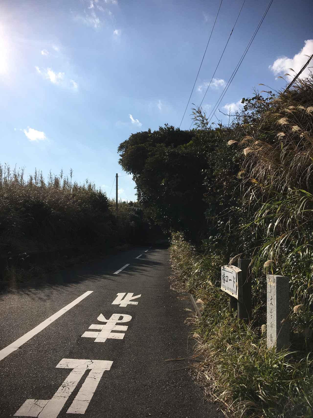 画像: きっと椿が咲き乱れる時期に来たら綺麗なんだろうなଘ(੭´ ꒫`)੭̸* そんなことを妄想しながら走るのもまた、楽しいね