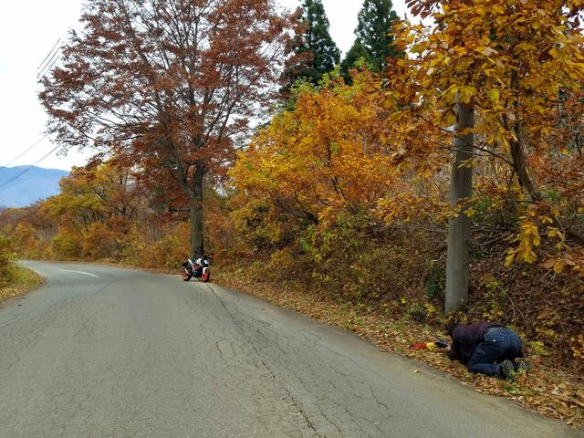 画像: 紅葉とDUKE390…なんかいい感じ。 の中に、カメラマン関野さん(笑)