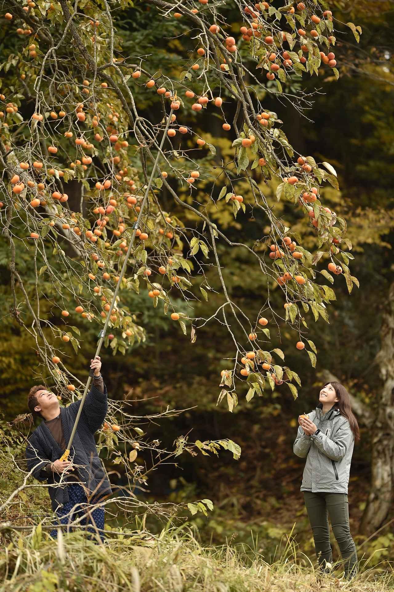 画像: GOGGLEの誌面に載っていた写真は ここの柿の木でした!