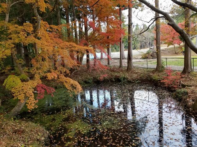画像: 池に行くちょっとした通り道が紅葉しててすっごく綺麗だった!! なんか不思議な感じのする場所。夜はちょっと怖いかも…。