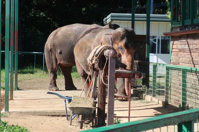 画像: 乗れるそうです。(*^^*) 他にもラクダやトラなどたくさんの動物がいました!