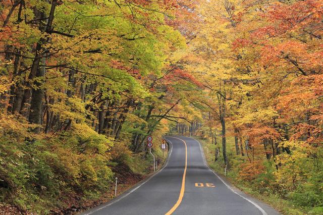 画像: 「大山環状道路」例年の見頃:10月下旬~11月上旬