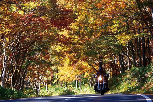 画像: 「戸隠高原」例年の見頃:10月上旬~10月中旬/撮影:増井貴光