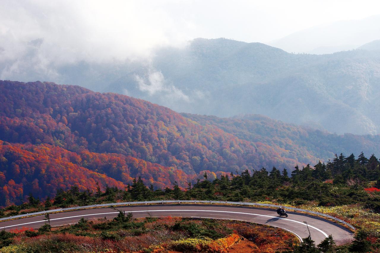 画像: 「蔵王エコーライン」例年の見頃:10月中旬/撮影:増井貴光
