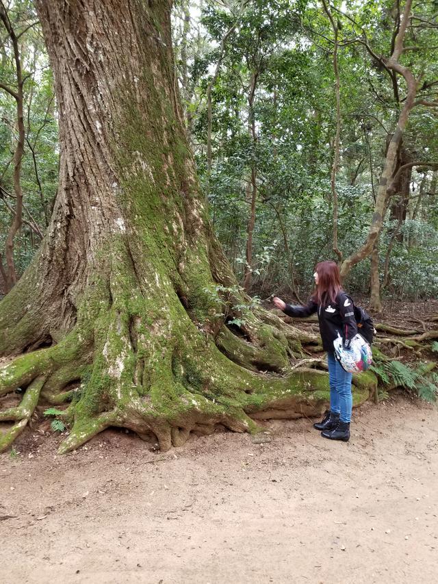画像: 見て見て~さおりさん!この木なんか凄くないですか? …うっうん( ̄▽ ̄;)