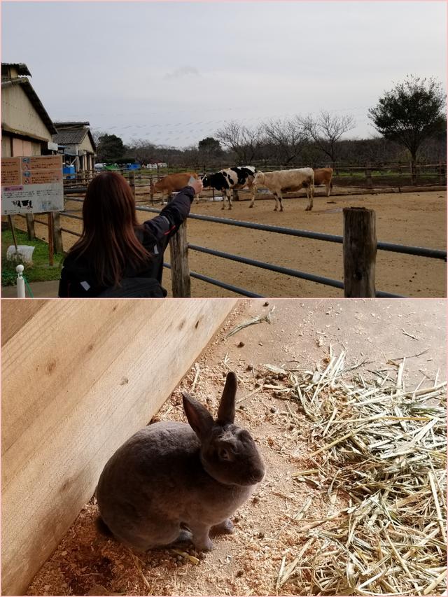 画像: 久しぶりにウサギ見た!かわいい(*´`)