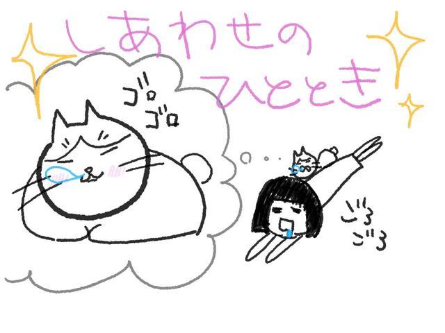 画像: こんにちはっ♪ 余生は猫とゴロゴロして暮らしたい 美環だよっ☆