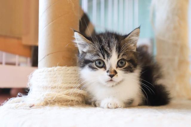 画像1: 猫カフェで癒しのひととき・・・