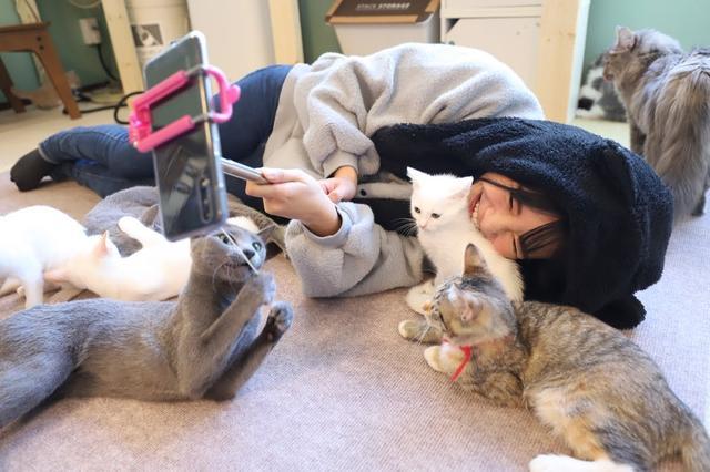 画像2: 猫カフェで癒しのひととき・・・