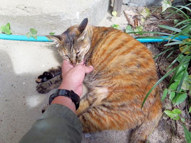画像: 猫校長のたかねちゃん。校庭で日向ぼっこしているときもあるので訪れる際は気をつけてくださいね