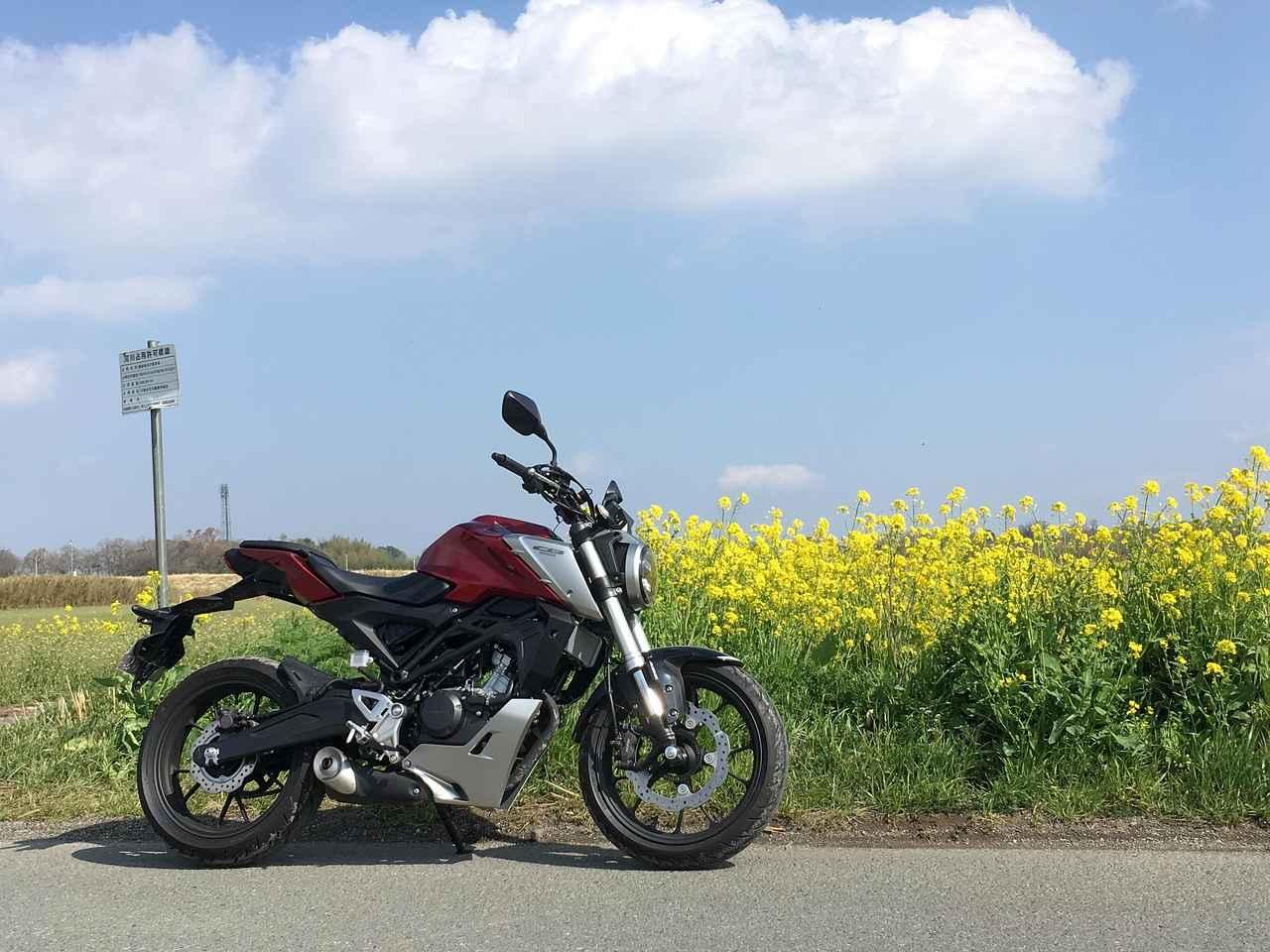 画像: 帰りの荒川土手に黄色い畑が広がっていました 景色の色がね、春ですね