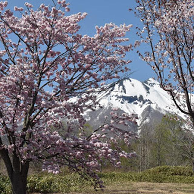 画像: 世界一の桜並木