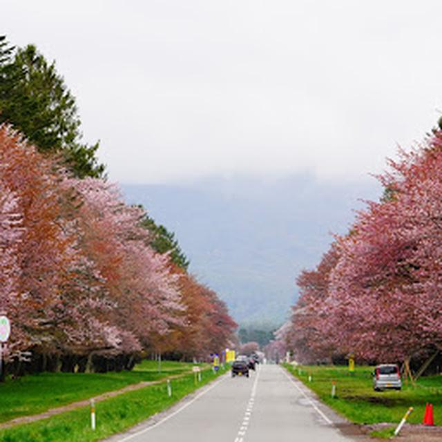 画像: MAP 二十間道路の桜並木