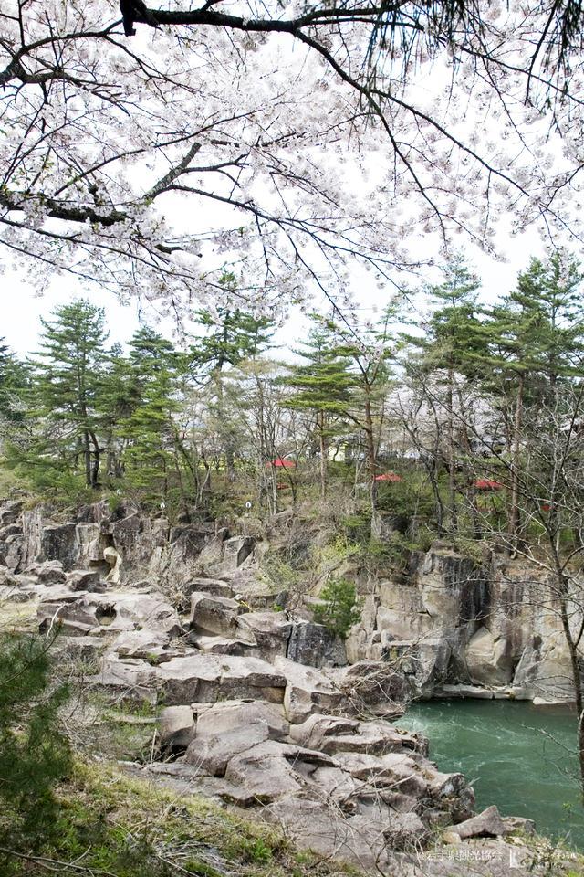 画像2: 東北6県の桜情報! 4月下旬、おすすめ「お花見ツーリングスポット」8選