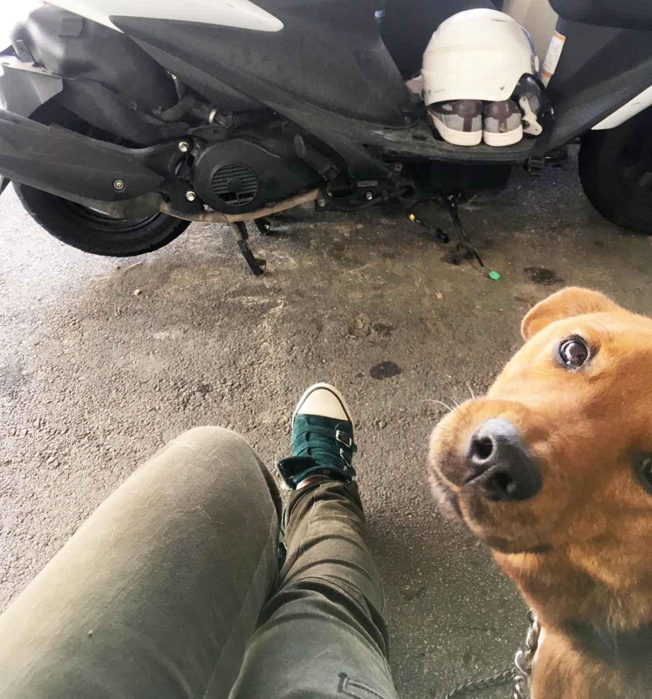 画像4: ということで、【福山理子調べ】沖縄で1番お安いレンタルバイク屋さんにGO!!