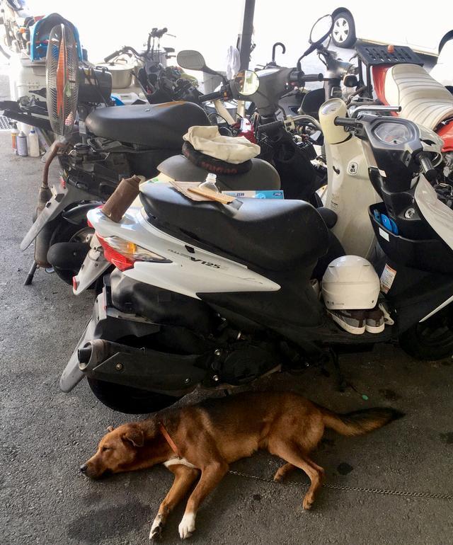 画像6: ということで、【福山理子調べ】沖縄で1番お安いレンタルバイク屋さんにGO!!
