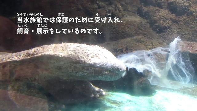 画像: 脱皮したオオサンショウウオ youtu.be