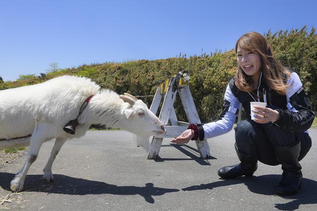 画像: 途中では、ヤギさんと触れ合うこともできまーす!