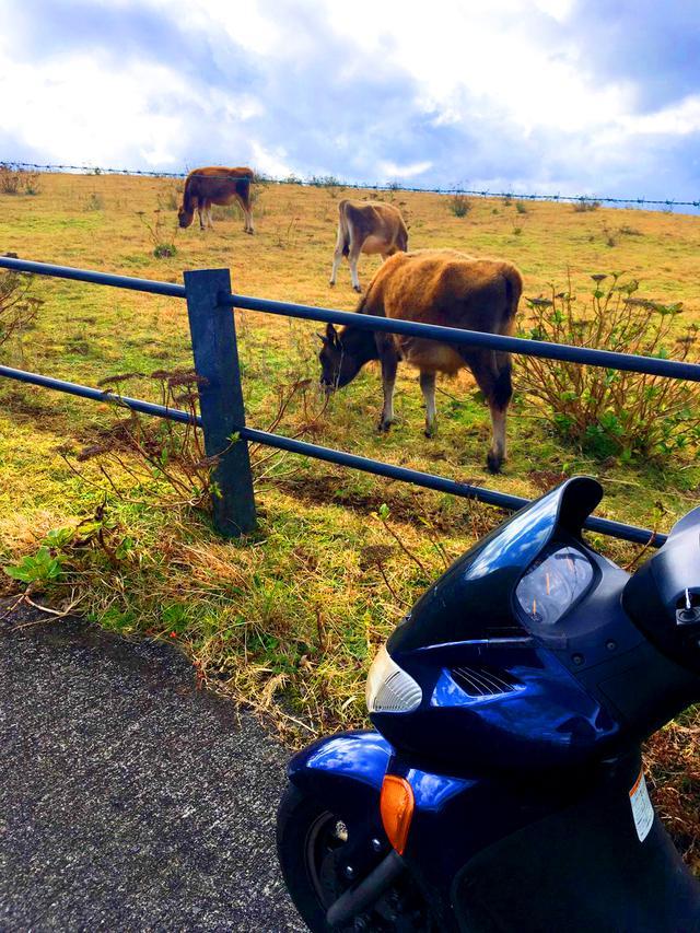 画像1: 八丈島に来たら必ず見たい牧場からの絶景! 福山理子の八丈島レンタルバイク・ソロツーリング②~島内バイク旅編~