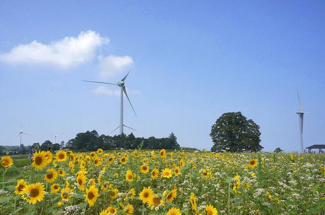 画像: 8月下旬から9月上旬、まさにこんな景色が見られるのでしょうね! 写真:福島県観光復興推進委員会
