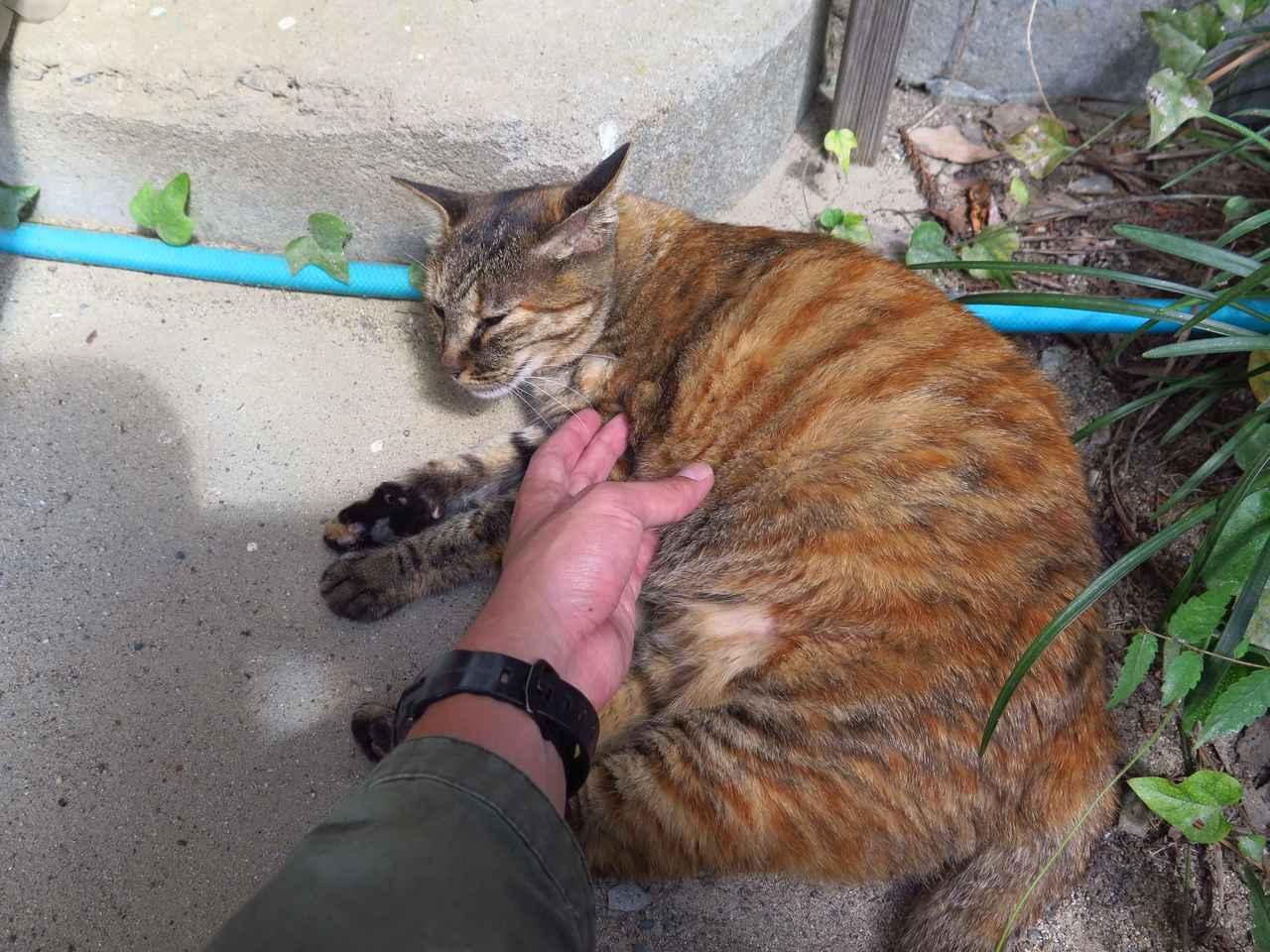 画像: 猫校長と呼ばれている旧木沢小学校のアイドルたかねちゃん。敷地を自由に歩き回っていますので、バイクで校庭に入場される際は、お気をつけてくださいね。