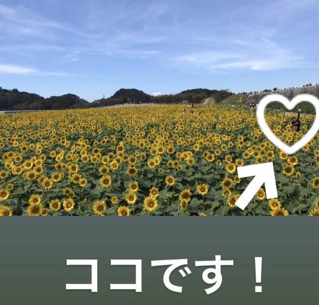 画像7: 有名なお花畑でまさかの⁈⁈