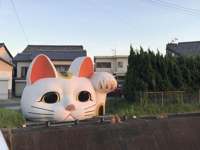 画像1: 常滑の猫ちゃん