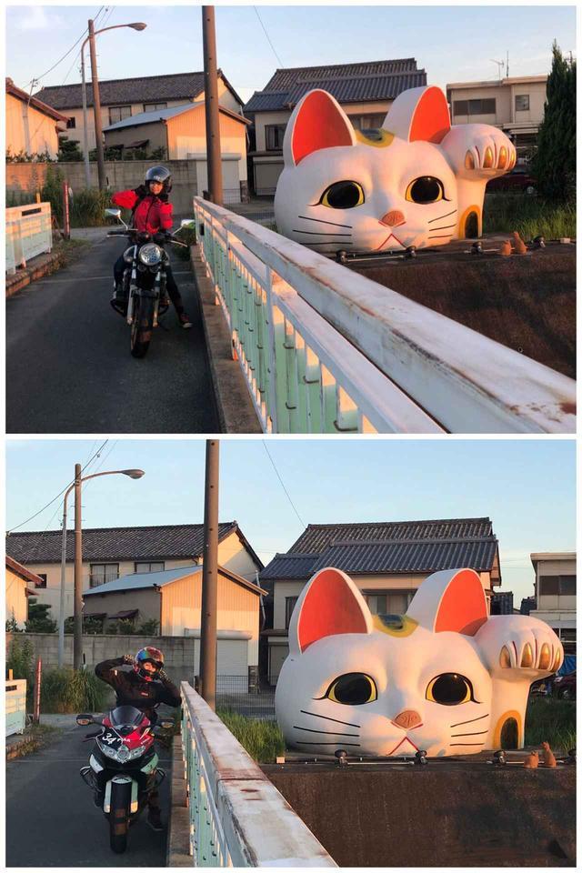画像2: 常滑の猫ちゃん