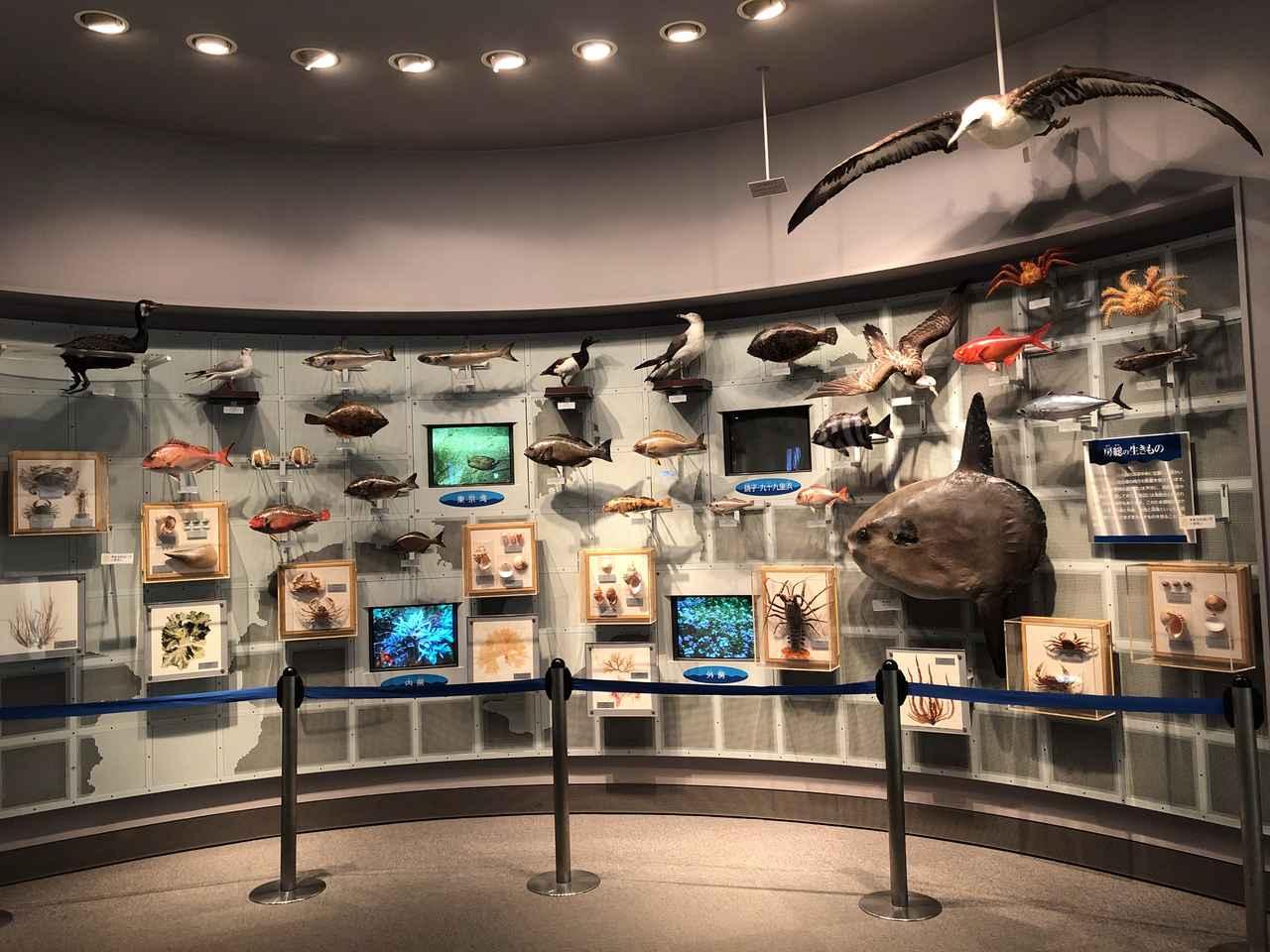 画像1: 次に ブーンと走って海の博物館( д) ゚ ゚