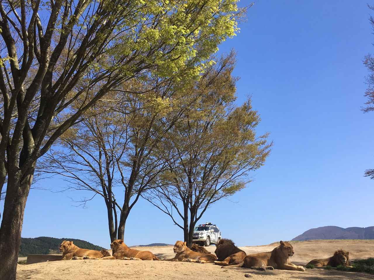 画像9: 福山理子の大分ツーリング〈番外編〉バイクに乗っていない時間も旅先を楽しむ。それが、あたし流!