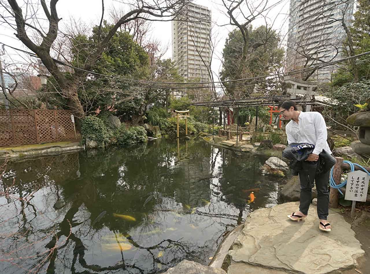 画像: 境内の池には色とりどりの鯉が泳いでいました。蛇やカエルも当たり前にいるというほど自然が豊かなためか、鯉を狙って、どこからかサギが飛んでくるそうです。東京にもこんなに緑が残っている場所があったとは、なかなか新鮮ですね!