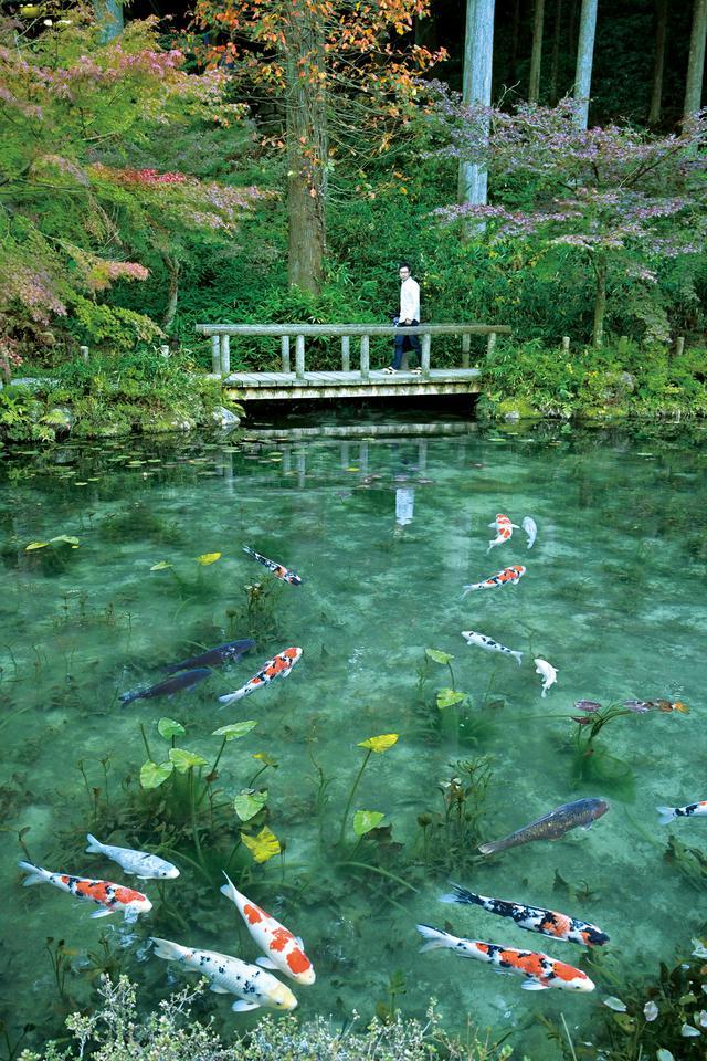 画像: 名もなき池(モネの池) この地域には白っぽい岩が多く、いろいろな条件が重なり池底には白い砂だけが残ったそうです。それにより、元々の水の綺麗さも相まって、この景観になったとか。そこへ地域の人が植物を植えるなどして、いつしかモネの池と呼ばれるようになったそうです。