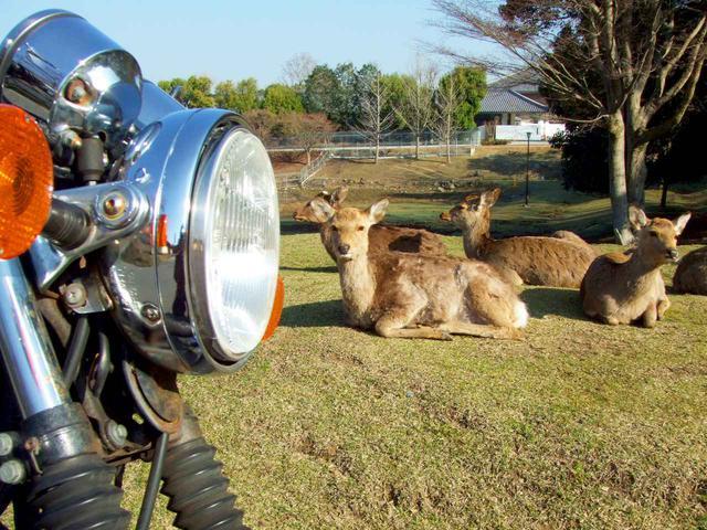 画像: 写真は奈良公園。