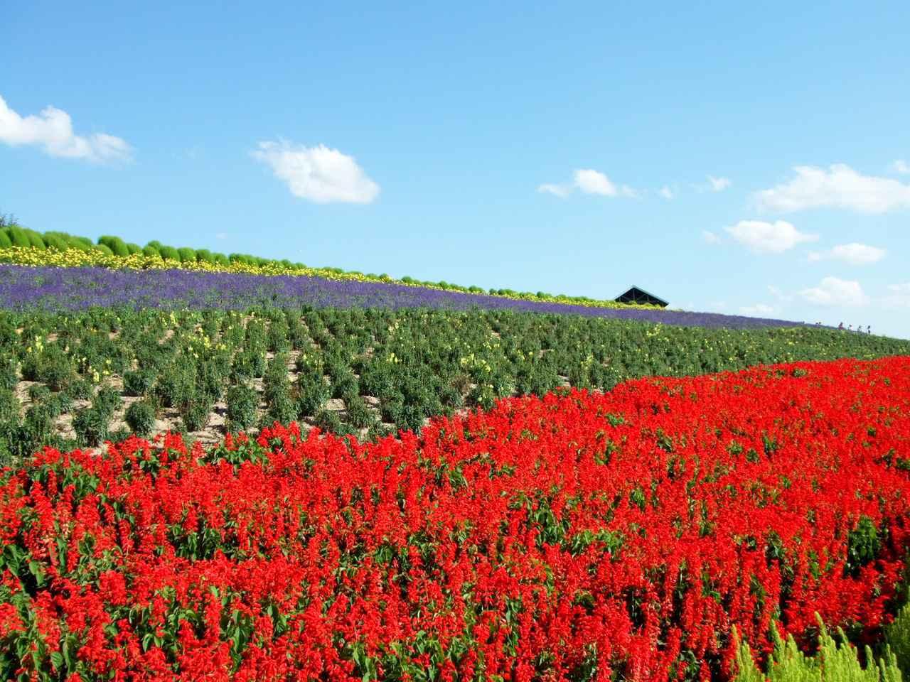 画像1: ① 北海道「美瑛の丘風景」