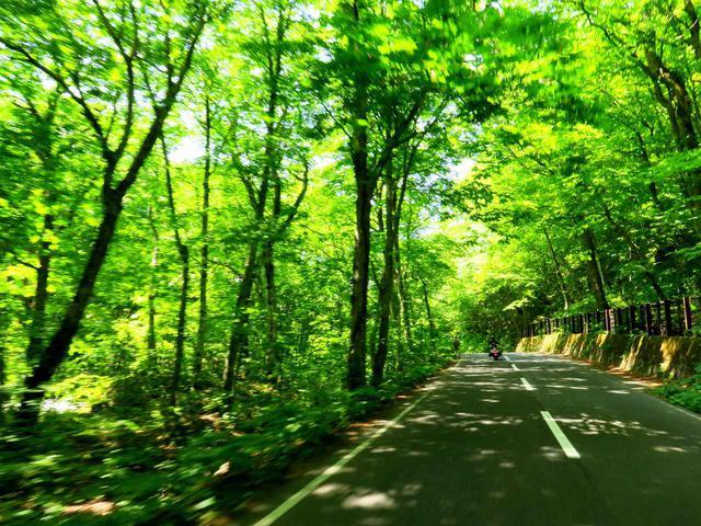 画像: 八甲田・十和田ゴールドラインの一部である「奥入瀬渓流」沿いの道。ここの新緑は、いままで見た中で最も鮮やかでした。