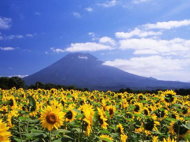 画像: 倶知安観光協会