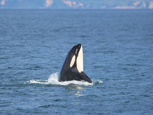 画像1: アイサーチ・ジャパンとのコラボG-SHOCK・BABY-G「イルカ・クジラモデル」最新作