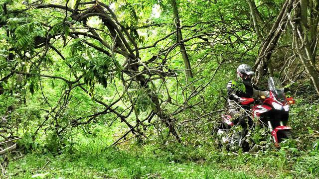 画像: バイクに傷がつかないように慎重に枝を避けながら進む。これぞアドベンチャー笑