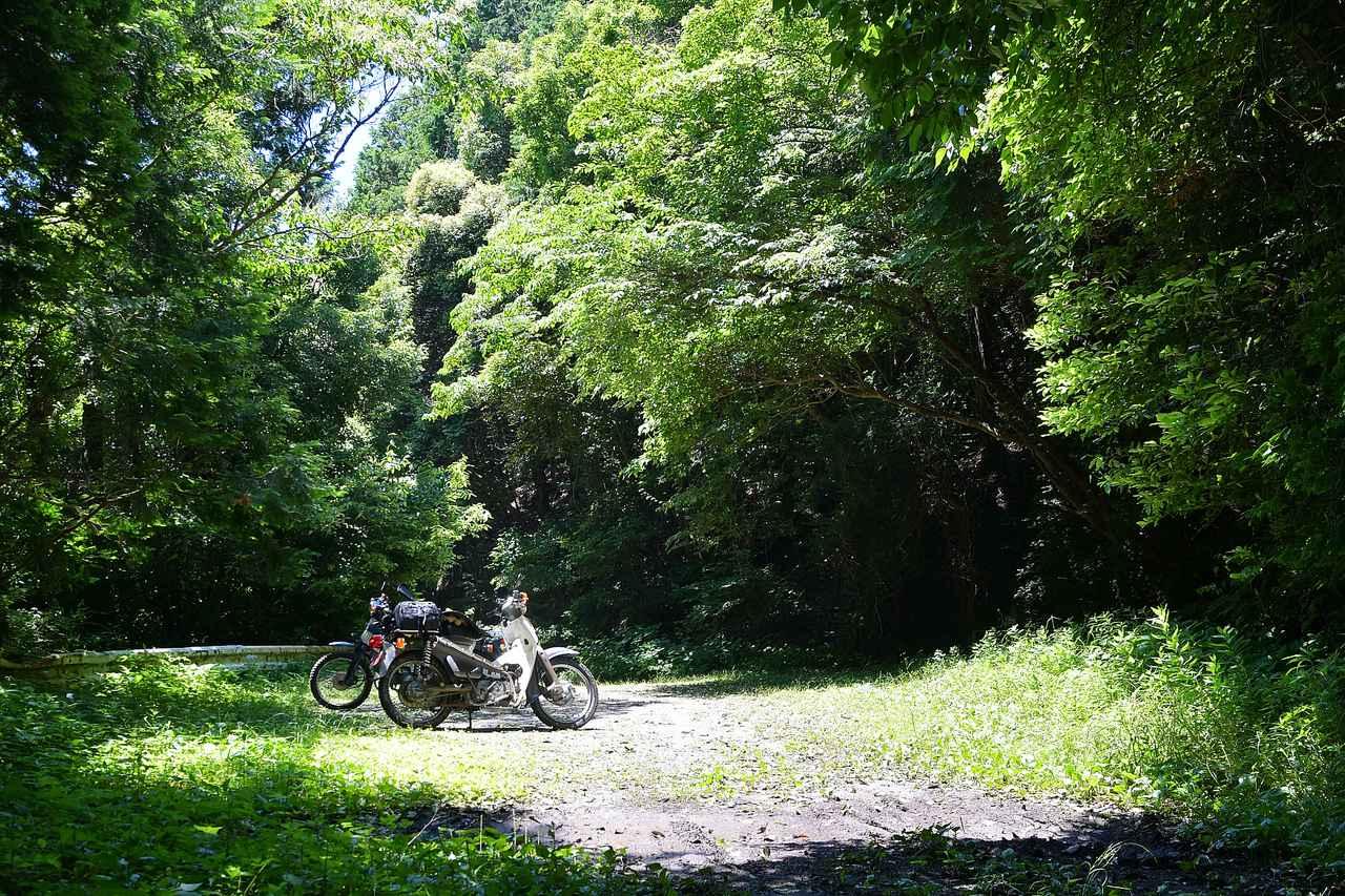 画像5: いざゆかん林道へ