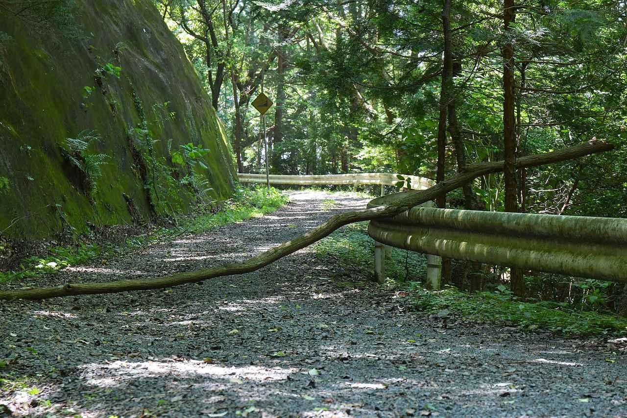 画像3: いざゆかん林道へ