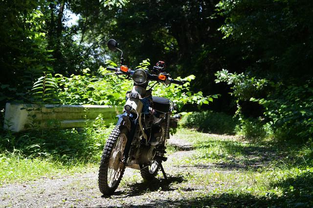 画像6: いざゆかん林道へ
