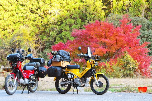 画像3: 帰りは紅葉狩り。