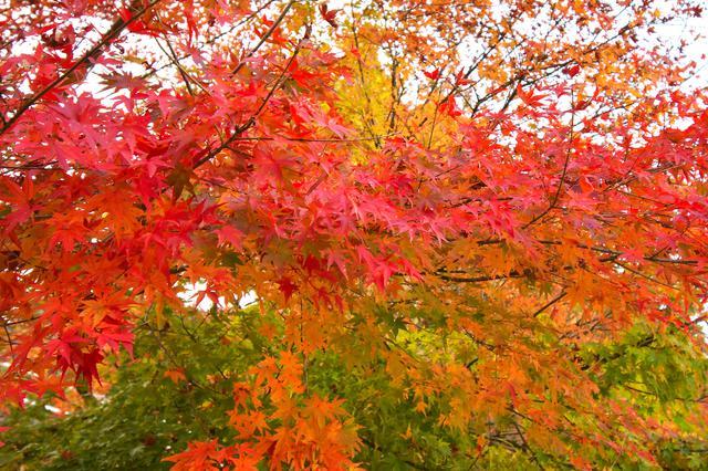 画像1: 帰りは紅葉狩り。