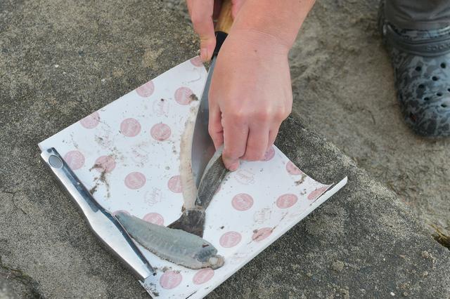 画像: 頭とエラとワタを取ったら5枚におろします。普通の魚は3枚におろすんだけど、こいつは5枚。